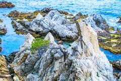 The rocky coastline. Tree on the rock Stock Photos