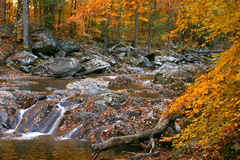 Rocky creek autumn forest Stock Image