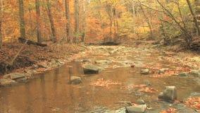 Rocky creek in autumn woods stock video footage