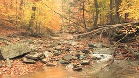 Rocky creek in autumn woods stock video
