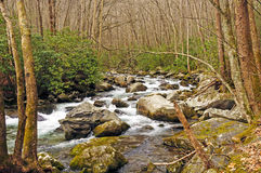 Rocky Creek in a Mountain Forest Royalty Free Stock Photo