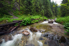 Rocky creek in Tatra mountains Stock Images