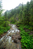 Rocky creek in Tatra mountains Royalty Free Stock Photos