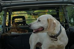 Truffle dog in the Langhe. Rocky: dog for truffles research, La Morra - Italy stock photos