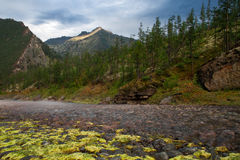 The rocky and dry riverbed in the mountains. Stock Photos