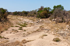 Rocky dry riverbed with trees and bushes Royalty Free Stock Images