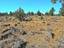 Rocky Field. Lava rock field near Buckhorn Rim - west of Redmond, OR Royalty Free Stock Photography