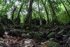Rocky Floor av den tropiska rainforesten Royaltyfri Foto
