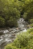 Rocky flowing creek Stock Photography