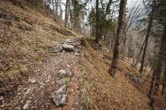 Rocky footpath on the Alp lake. Stony hiking trail on the north bank of the Alpsees in Schwangau / Allgau / Bavaria from the spring of 2015 Stock Photography