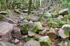 Rocky footpath in the forest Royalty Free Stock Photos