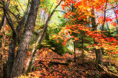 Rocky Forest in the Autumn Royalty Free Stock Image