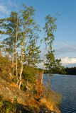 Rocky forest lake. In Leningrad oblast, Karelian Isthmus. Russia. Evening sunlight Royalty Free Stock Image
