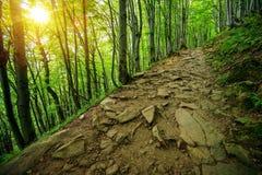 Rocky Forest Trail Path photo libre de droits