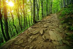 Rocky Forest Trail Path Royalty Free Stock Photo