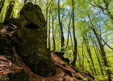Rocky formation among the green forest. Mysterious place looks like stone idol. lovely place in wild woods Royalty Free Stock Images