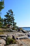 Rocky Georgian Bay Shoreline y pinos azotados por el viento imágenes de archivo libres de regalías