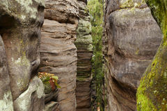 Rocky gorge. Sandstone rocky gorge in the National park Bohemian paradise Stock Photography