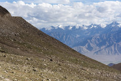Rocky grass slopes with a view of Himalayan mountains in Ladakh, India, Asia Royalty Free Stock Photos