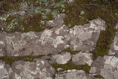 Rocky ground with moss. Texture of rocky ground with moss and lichen royalty free stock photography