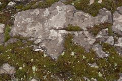 Rocky ground with moss. Texture of rocky ground with moss and lichen royalty free stock image
