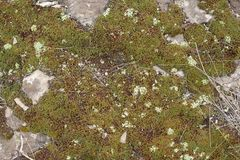 Rocky ground with moss. Texture of rocky ground with moss and lichen royalty free stock photo