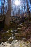 Rocky gully walk path trail through hardwood forest Royalty Free Stock Photo