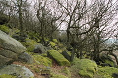 Rocky hill. With moss covered rocks and bare trees stock photography