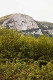 Rocky hill over the trees Stock Images