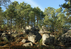 Rocky hills in Fontainebleau forest stock photography
