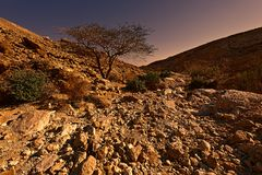 Negev Desert in Israel at Sunset Royalty Free Stock Photos