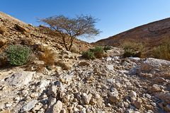 Negev Desert in Israel. Rocky hills of the Negev Desert in Israel. Wind carved rock formations in the Southern Israel Desert Royalty Free Stock Photo