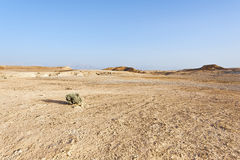 Negev Desert in Israel Royalty Free Stock Photos