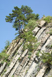 Rocky hillside. With vegetation and trees by the Black Sea Stock Images