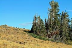 Rocky Hillside com as árvores sempre-verdes Scraggly em Oregon oriental, fotos de stock