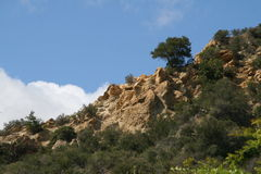 Rocky Hillside. A rocky hillside dotted with trees Stock Images