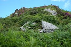Rocky hillside, Islay. Rocky hillside covered with ferns and heather Stock Photography