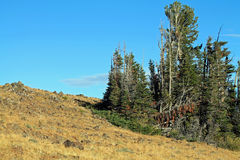 Rocky Hillside with Scraggly Evergreen Trees in Eastern Oregon,. USA Stock Photos