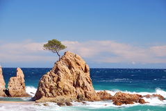 Rocky islet. Small rocky  islet with a pine tree over a rough sea Stock Images