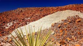 Rocky Landscape in Big Bend National Park. Rocky desert landscape with rocks of different colors at Big Bend National Park Stock Images