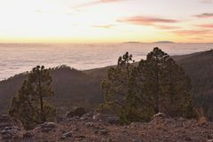 Rocky landscape with coniferous trees Tenerife Canary Islands stock photos