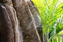 Rocky landscape in Seychelles with cobwebs and plant Stock Photography