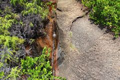 Rocky landscape in the Seychelles with plants Stock Images