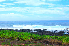 Rocky lava rock shore on Hawaii Royalty Free Stock Photos