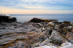 Rocky ledges and Atlantic Ocean Royalty Free Stock Photo