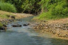 Rocky Little Stream Royaltyfri Foto