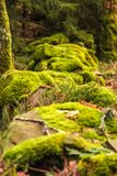 Rocky low wall covered with moss close up Royalty Free Stock Photo