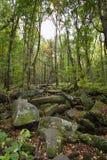 Rocky Lush Green Great Smoky-Bergpark royalty-vrije stock afbeelding