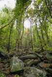 Rocky Lush Green Great Smoky-Bergpark royalty-vrije stock foto's