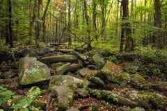 Rocky Lush Green Great Smoky-Bergpark stock afbeeldingen